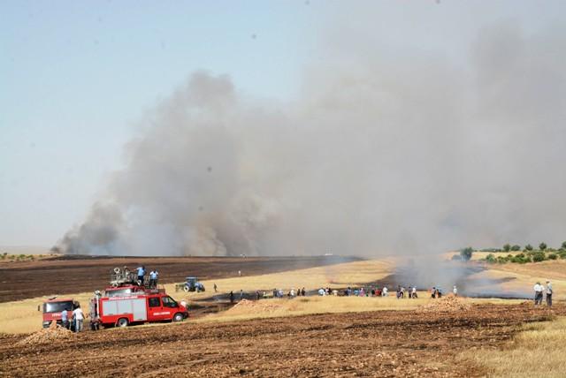 500 dekar ekili arazi kül oldu