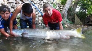 Zap Suyu'nda 60 kilogram balık yakalandı