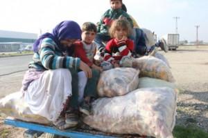 Nusaybin'de vatandaşlar, mısır koçanlarını topladı
