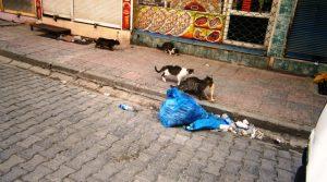 Terörden sokak hayvanları bile zarar gördü
