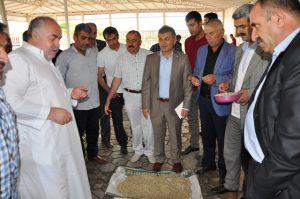 Kızıltepe'de ilk arpa hasadı