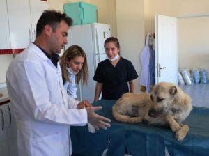 Mardin'de Hayvan Hastanesi Kuruluyor