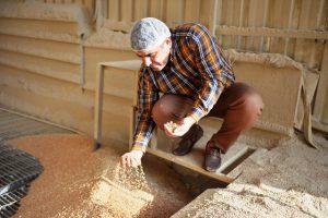 Mardin'in buğdayı Irak'a un olarak gidiyor