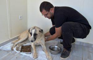 Tüfekle vurulan köpek tedavi altına alındı