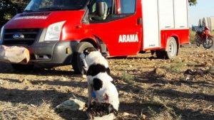 Sulama kanalında mahsur kalan köpek kurtarıldı