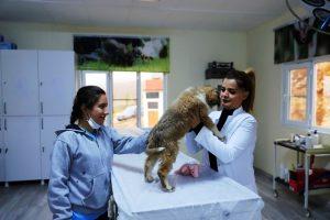 Yavru köpek tedavi edildi