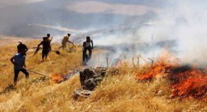 Mazıdağı'nda ormanlık  alanda yangın