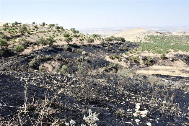 Deyrulzafaran Manastırındaki yangında zeytin ve meyve ağaçları yok oldu