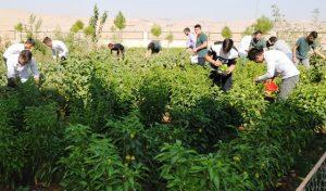 Öğrenciler okul ve pansiyon bahçesinde meyve sebze üretti