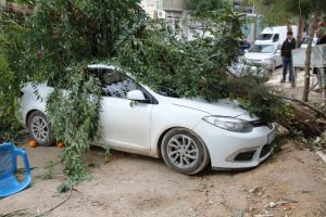 Kuvvetli rüzgar nedeniyle ağaç, otomobilin üzerine devrildi
