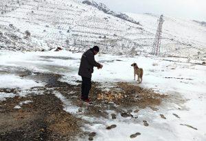 Soğuk hava nedeniyle sokak hayvanlarına yemleme