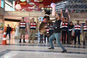 Jandarma'dan eğitimli köpek gösterisi