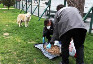 Belediyeden sokak hayvanlarına yem