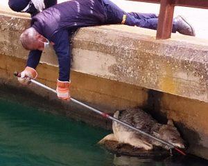 Sulama kanalına düşen kurt,  itfaiye ekiplerince kurtarıldı