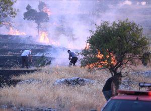 Orman yangınında 20 hektar alan zarar gördü
