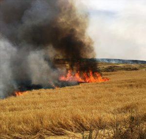 150 dönüm arazi yandı