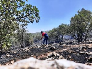 Savur'da çıkan yangın söndürüldü
