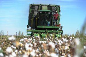Güneydoğu'da pamuk verimi ve fiyatıyla üreticiyi sevindirdi