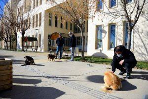 Akademisyenler kampüsteki sokak hayvanlarını unutmadı