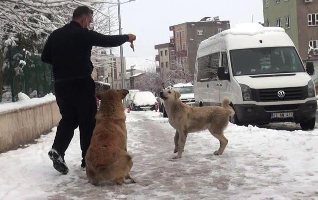 Kar nedeniyle yiyecek bulamayan  sokak hayvanlarına umut oldu