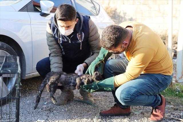 Yaralı bulunan kedi polislerin  yardımıyla tedavi ettirildi