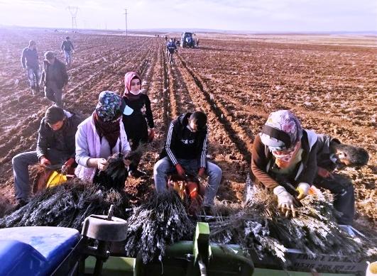 Kadınlar lavanta bahçeleri ile istihdam edilecek