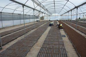 Kızıltepe Belediyesi 350 bin çiçek  tohumunu toprakla buluşturdu
