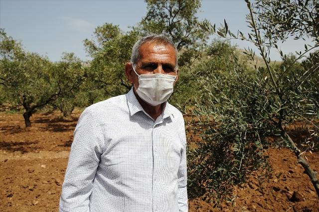 Ormanlara 25 yılını veren Mardinli, emekliliğinde de ağaçları aşılamaya devam ediyor