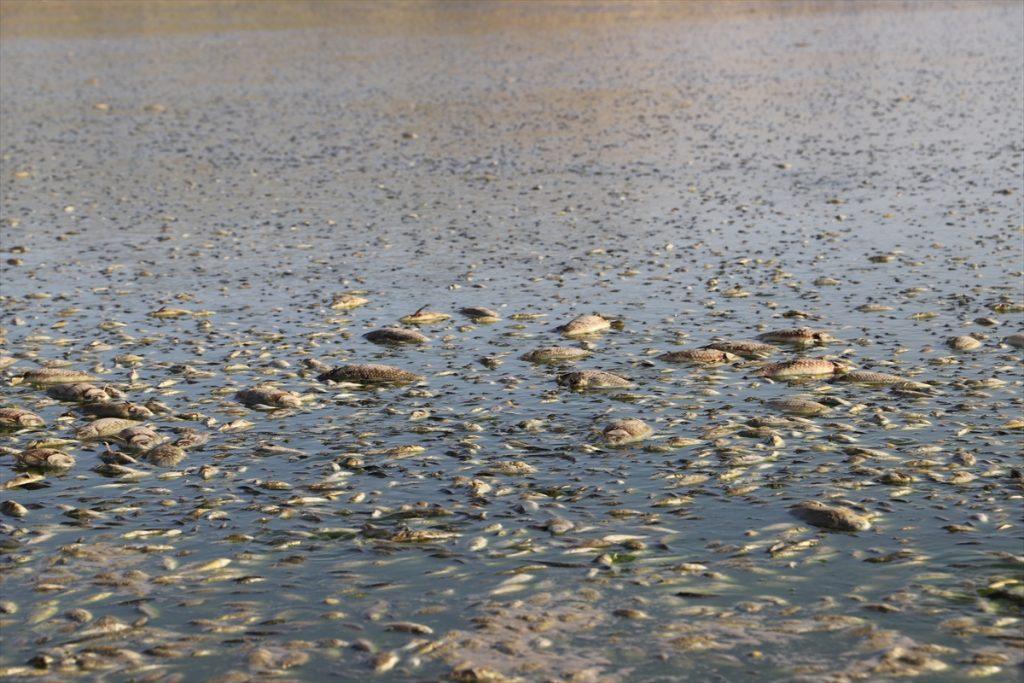 Kuruyan gölette toplu balık ölümleri görüldü