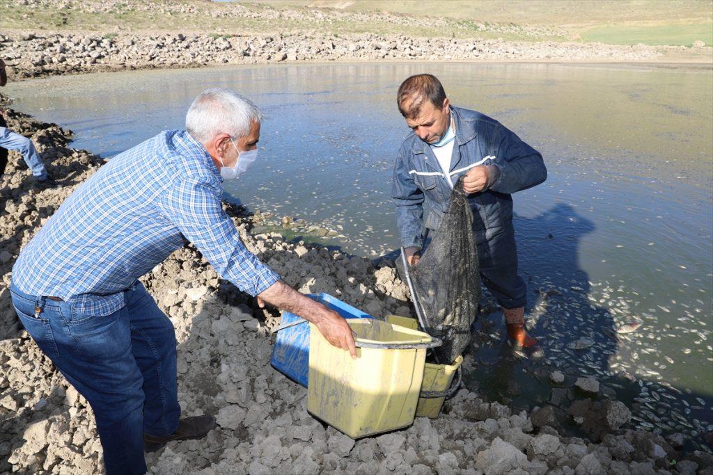 Canlı kalan balıklar yakalanıp baraja taşınıyor