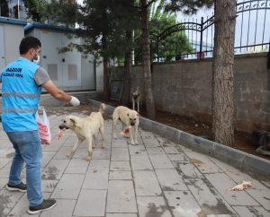 Tam kapanma sürecinde sokak hayvanları unutulmadı