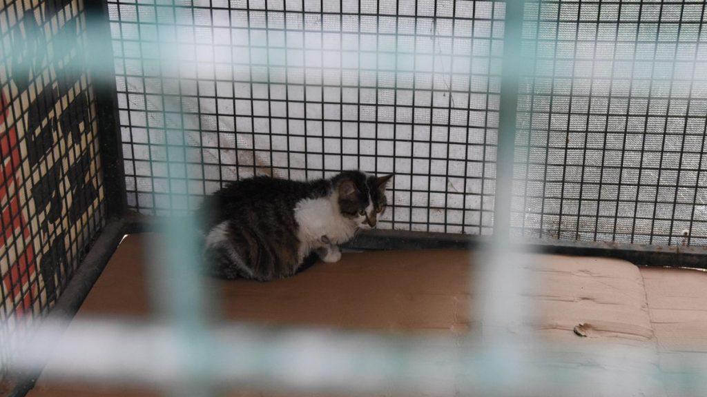 Kedi Kafesi alınacak