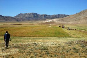 Bereketli topraklarda tarımsal faaliyet bayramda da hız kesmedi